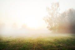 Árboles en el prado en abajo Foto de archivo libre de regalías
