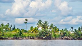 Árboles en el riverbank imagen de archivo