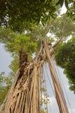 Árboles en el templo de la literatura en Hanoi imagenes de archivo