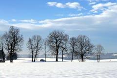 Árboles en el wintersun Foto de archivo libre de regalías