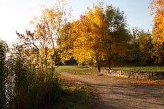 Árboles en follaje de otoño Otoño Pista y árboles Fotografía de archivo libre de regalías