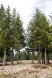 Árboles en Forest Forming una pista de senderismo natural fotografía de archivo libre de regalías