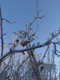Árboles en helada fotos de archivo