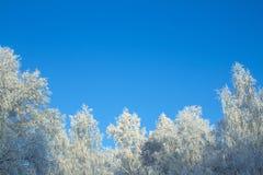 Árboles en helada, contra el cielo azul fotos de archivo