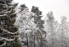 Árboles en helada de la escarcha Imagen de archivo libre de regalías