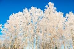 Árboles en helada del invierno Fotos de archivo libres de regalías