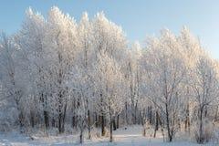 Árboles en helada y nieve Foto de archivo libre de regalías