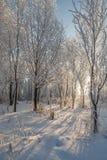 Árboles en helada y nieve Imagenes de archivo