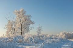 Árboles en helada y nieve Imagen de archivo libre de regalías