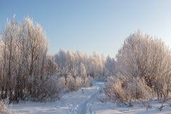 Árboles en helada y nieve Imagen de archivo
