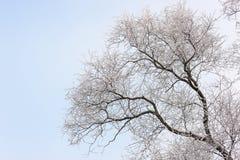 Árboles en helada y nieve Fotos de archivo libres de regalías