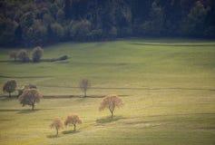 Árboles en hierba Fotos de archivo