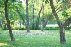 Árboles en hierba en parque en la opinión del fondo de la falta de definición imagen de archivo libre de regalías