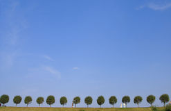 Árboles en horizonte Imagen de archivo libre de regalías