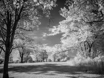 Árboles en infrarrojo Imagen de archivo libre de regalías