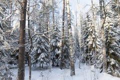 Árboles en invierno Imagen de archivo libre de regalías