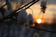 Árboles en invierno foto de archivo libre de regalías