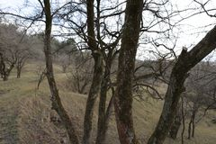 Árboles en invierno Fotografía de archivo