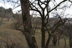Árboles en invierno Foto de archivo