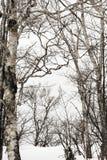 Árboles en invierno Imagen de archivo