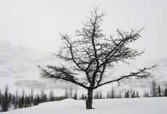 Árboles en invierno Fotos de archivo