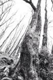 Árboles en invierno en el valle superior de Swansea Imagen de archivo libre de regalías