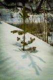 Árboles en invierno en Rusia Foto de archivo libre de regalías