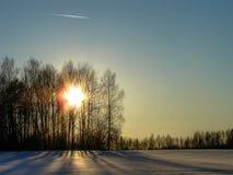 Árboles en invierno en Rusia Fotografía de archivo