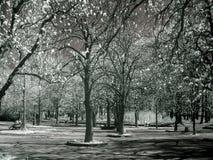 Árboles en IR - infrarrojo Fotografía de archivo