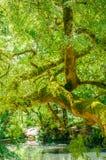 Árboles en jardín Fotos de archivo libres de regalías