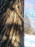 Árboles en la brisa foto de archivo libre de regalías