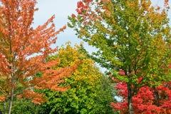 Árboles en la caída Fotografía de archivo
