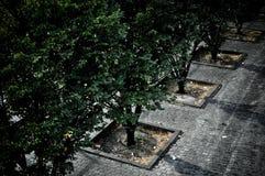 Árboles en la calle Foto de archivo