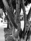 Árboles en la ciudad Fotos de archivo
