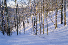 Árboles en la colina Fotos de archivo libres de regalías
