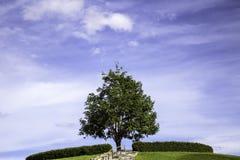 Árboles en la colina con un fondo del cielo Imagen de archivo libre de regalías