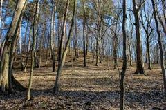 Árboles en la colina en bosque Fotos de archivo libres de regalías