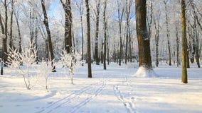 Árboles en la escarcha contra el cielo azul Caídas de la nieve almacen de metraje de vídeo