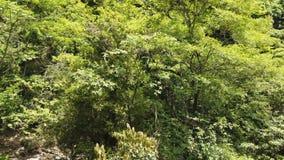 Árboles en la estación de verano del bosque almacen de video