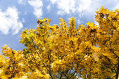 Árboles en la estación del otoño Imagenes de archivo