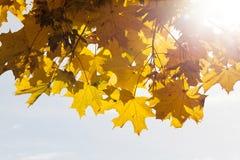 Árboles en la estación del otoño Foto de archivo