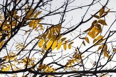 Árboles en la estación del otoño Fotografía de archivo