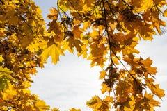 Árboles en la estación del otoño Fotos de archivo libres de regalías