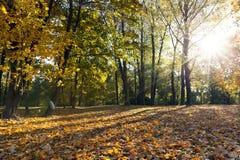 Árboles en la estación del otoño Fotos de archivo