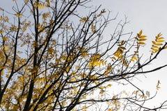 Árboles en la estación del otoño Foto de archivo libre de regalías