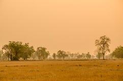 Árboles en la estación seca de Tailandia Fotos de archivo