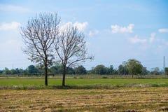 Árboles en la granja Imágenes de archivo libres de regalías