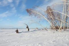 Árboles en la isla nevada Fotos de archivo