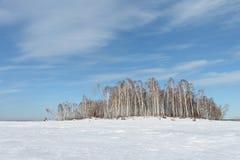 Árboles en la isla nevada Imagenes de archivo