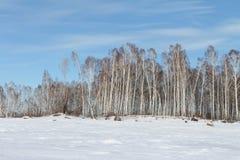 Árboles en la isla nevada Fotografía de archivo